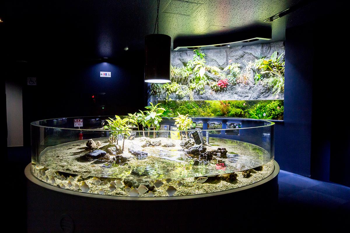 世界の淡水魚ゾーン