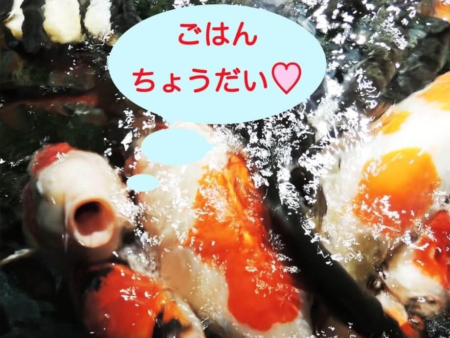 【平日限定】2月のエサやり体験