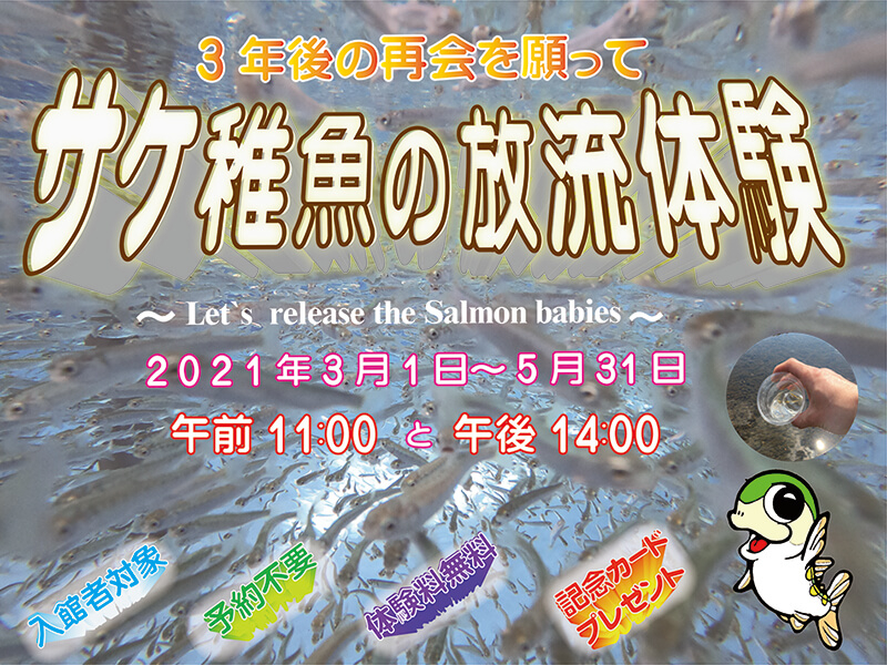サケ稚魚放流体験のお知らせ