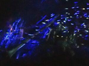 夜の水族館探検